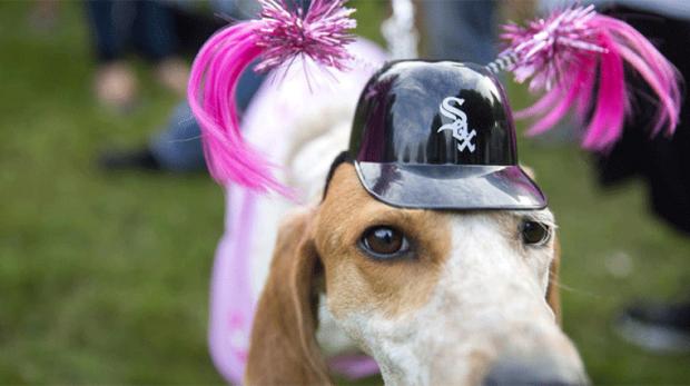 Time de beisebol põe mais de mil cachorros na torcida e bate recorde mundial