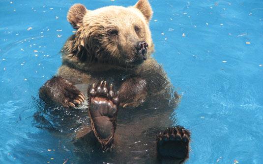 Urso no zoológico carioca. Foto: Esther Nazareth/RioZoo.