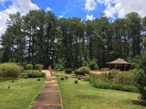 Jardim Japonês do Jardim botânico de Brasília