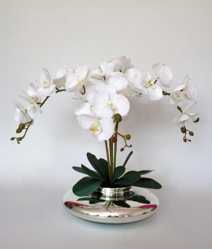 orquídea no vaso